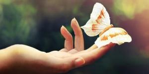 vlinder-in-hand