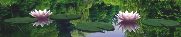 lotusvijver-960x250