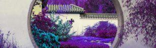 hof-van-heden-violet